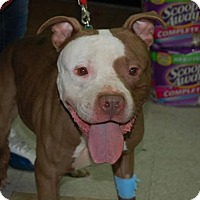Adopt A Pet :: Jupiter - Brooklyn, NY