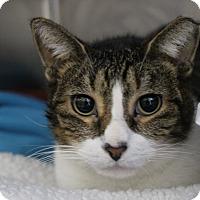 Adopt A Pet :: Lilly - Sarasota, FL