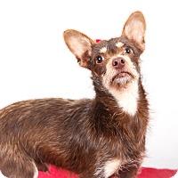 Adopt A Pet :: Lil John - Tehachapi, CA