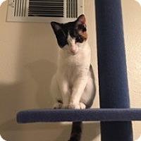 Adopt A Pet :: Luna - Kennedale, TX