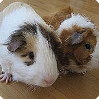 Adopt A Pet :: Sammy and Dean - Fullerton, CA