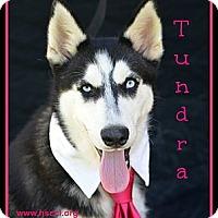 Adopt A Pet :: Tundra - Plano, TX