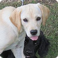 Adopt A Pet :: CAMI - Humboldt, TN