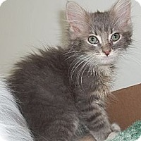 Adopt A Pet :: Rondo - Acme, PA