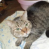 Adopt A Pet :: Lilly - Medina, OH