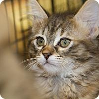 Adopt A Pet :: Erica - Irvine, CA