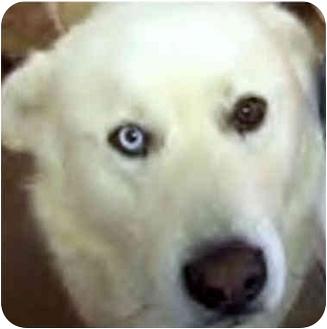 Chauncey Dog Name
