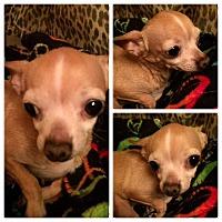 Adopt A Pet :: Candy - Edmond, OK