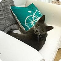 Adopt A Pet :: Tatiana - Richmond, VA