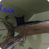Adopt A Pet :: Bryce - Colbert, GA