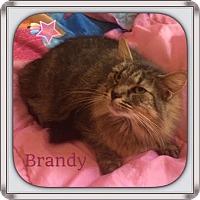 Adopt A Pet :: Brandy - Harrisburg, NC