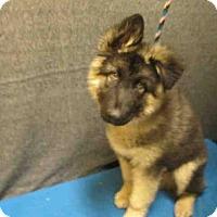 Adopt A Pet :: *CHARLIE - Upper Marlboro, MD