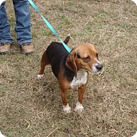 Adopt A Pet :: Alicia - Dumfries, VA