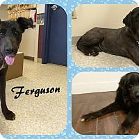 Adopt A Pet :: Ferguson - DOVER, OH