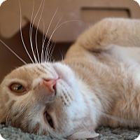 Adopt A Pet :: PEACHY BOY - San Pablo, CA