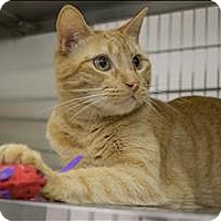 Adopt A Pet :: Sebastian - Sherwood, OR