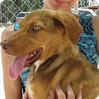 Adopt A Pet :: Hemi - Groton, MA