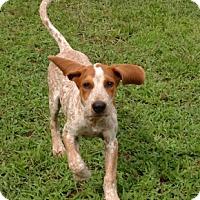 Adopt A Pet :: May Donna - Atlanta, GA