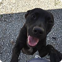 Adopt A Pet :: Cranium - Lewisburg, TN