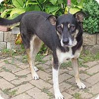 Adopt A Pet :: Hoka - West Chicago, IL