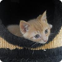 Adopt A Pet :: Kato - Creston, BC