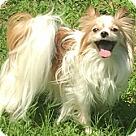 Adopt A Pet :: Trixie (in North Carolina)