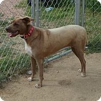 Adopt A Pet :: Molly - Peyton, CO