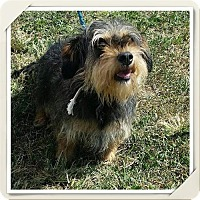 Adopt A Pet :: Havana (Has Application) - Washington, DC