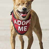 Adopt A Pet :: Mr. Magoo - Van Nuys, CA
