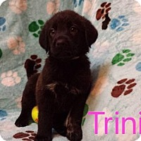 Adopt A Pet :: Trinity - Hainesville, IL