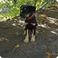 Adopt A Pet :: Jackson - West Warwick, RI