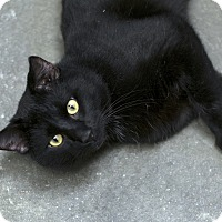 Adopt A Pet :: Norman - Fremont, NE