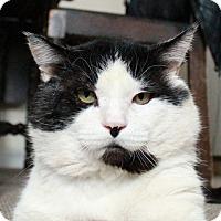 Adopt A Pet :: Cornelius - Vancouver, BC