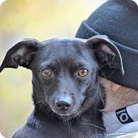 Adopt A Pet :: Charlie Heaton - Brooklyn, NY