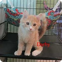 Adopt A Pet :: Darby - Warren, PA