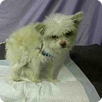 Terrier (Unknown Type, Small) Mix Dog for adoption in San Bernardino, California - URGENT on 11/25 @DEVORE