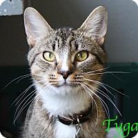 Adopt A Pet :: Tyga - Bradenton, FL