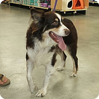 Adopt A Pet :: AUDREY - Wilmington, NC