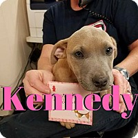 Adopt A Pet :: Kennedy - College Station, TX