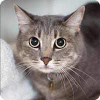 Adopt A Pet :: Gandalf - San Luis Obispo, CA