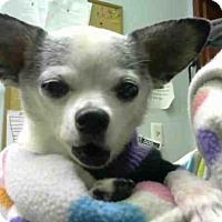 Adopt A Pet :: PRINCESS - Atlanta, GA