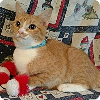 Adopt A Pet :: Honey- 5-6 MONTHS - Hillside, IL