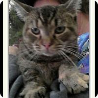 Adopt A Pet :: Clareece - Trevose, PA
