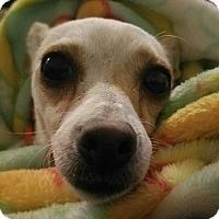 Adopt A Pet :: Marnie - North Las Vegas, NV