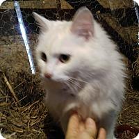 Adopt A Pet :: Aspen - Harrisonburg, VA