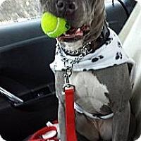 Adopt A Pet :: Luna - Seattle, WA