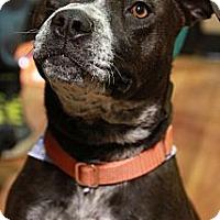 Adopt A Pet :: Phoenix - Calgary, AB