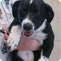 Adopt A Pet :: ZACHARY - Kingwood, TX