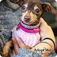 Adopt A Pet :: Bella - Myersville, MD