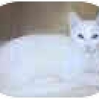 Adopt A Pet :: Benjamin - Dallas, TX
